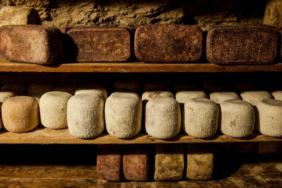 Israele - I formaggi di Shai Zelter